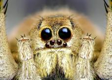 Araignée, la tisserande des destins