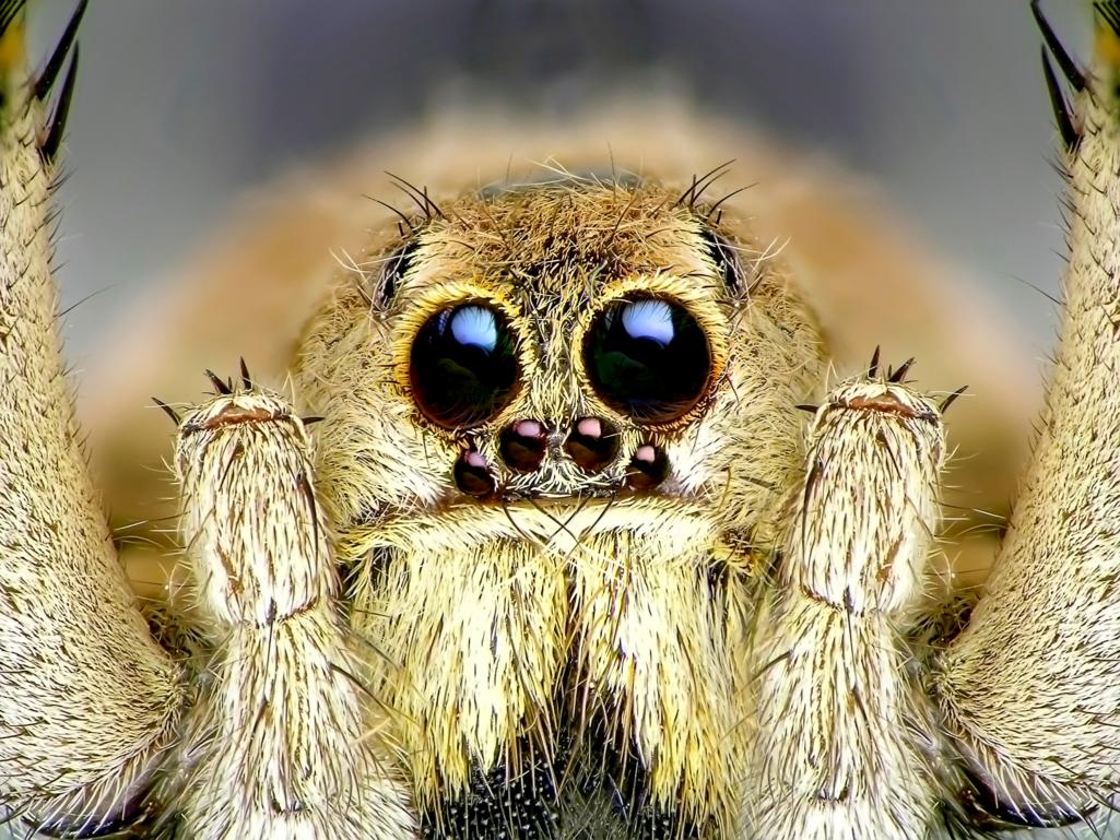 L'araignée, un animal qui représente bien le féminin !