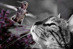 L'animal totem une protection pour voyager dans les mondes invisibles