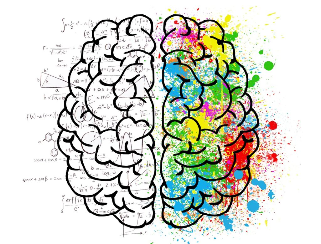 Le cerveau et les 5 sens