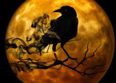 Le corbeau, oiseau de malheur ou véritable messager des dieux ?