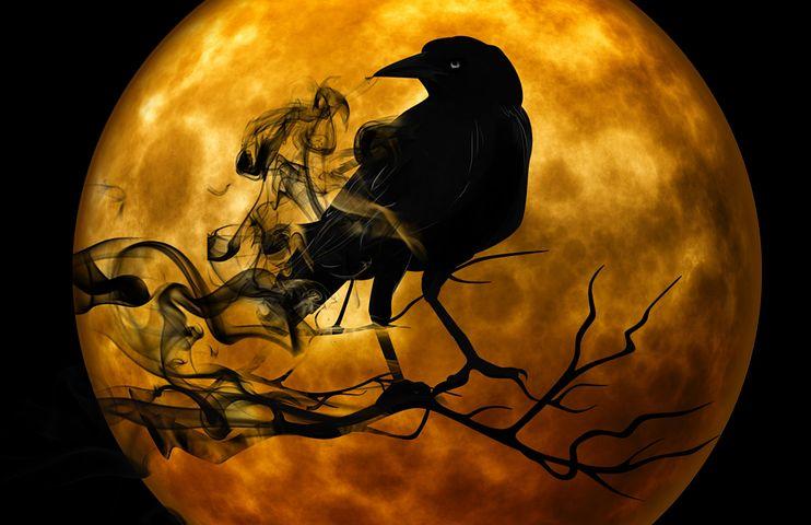 Découvrez le corbeau, l'oiseau messager des dieux !
