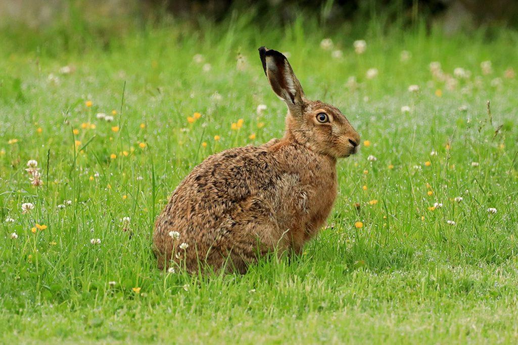 Animal de pouvoir : découvrez le lapin de garenne !