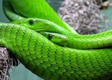 L'archaïque et sage serpent