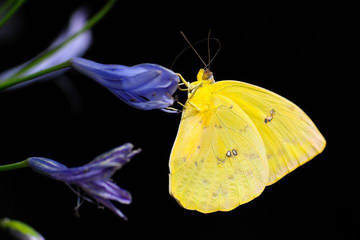 Affrontez le papillon pour entamer votre voyage entre la vie, la mort et la résurrection !