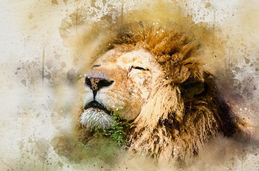 Lion dessin