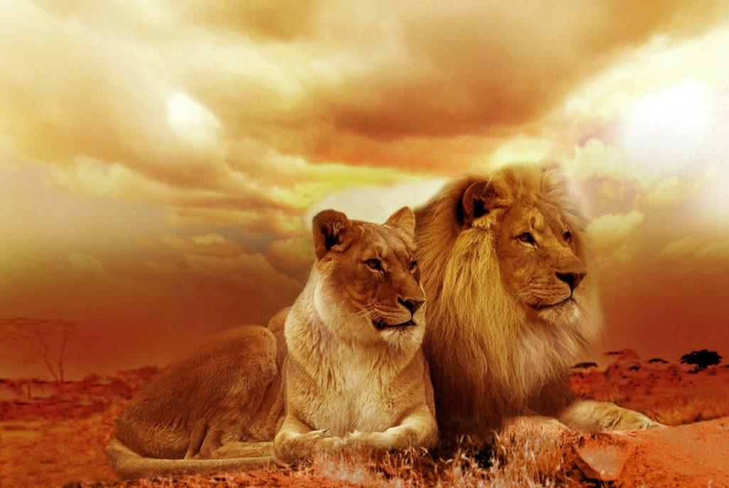Animal de pouvoir : découvrez la lionne et le lion !