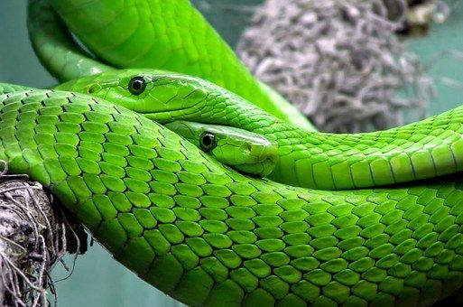Découvrez le serpent, symbole du Christ et de Satan !